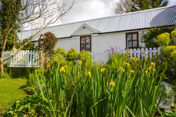 The outside of Pandy Cottage with yellow irises and bushes