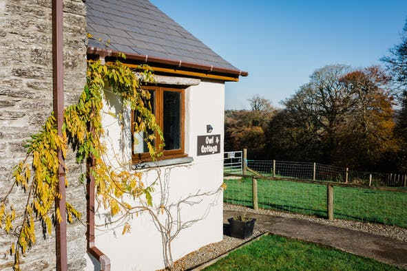The outside of Owl Cottage with a plant growing up the wall and lawn