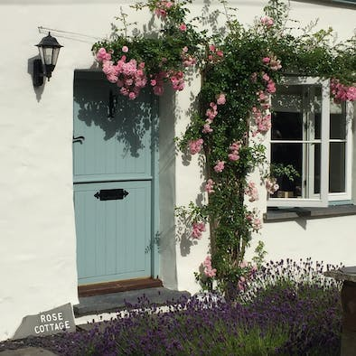 Rose Cottage front door with roses growing up the wall and lavender in front