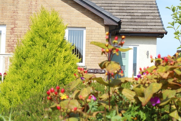 View over garden trees and shrubs to Pant-y-Celyn Studio Apartment front door